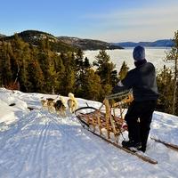 Traîneau a chiens Fjord-du-Saguenay