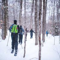 Randonnée en ski-raquette (Ski Hok) au parc national de la Jacques-Cartier