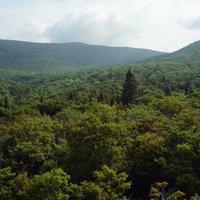 Les écosystèmes forestiers du Parc du Massif du Sud